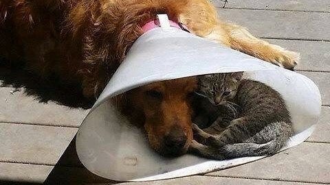 [Kink] The Cone of Shame is Fun with Friends
